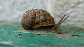 snail on green surface