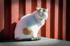 dreamy domestic cat outdoor