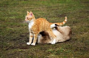 playful cheerful cats