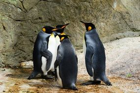 exceptional King Penguin