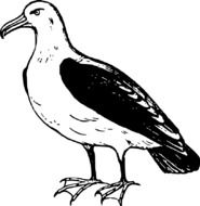 Albatross black and white sketch