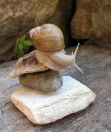 snail on stacked stones