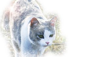 drawn domestic gray-white cat