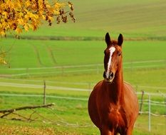 brown horse on the green pasture in autumn
