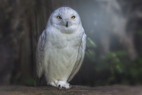 white owl is sitting on a tree branch