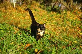 dark cat in bright colors of autumn