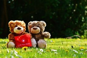 teddy bear with a red bag on a green grass