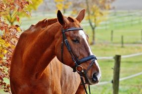 light brown horse in autumn