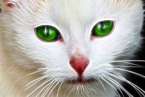 white face cat with green eyes