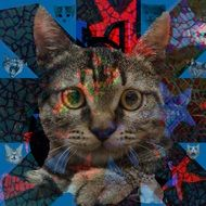 image of a cat as an abstraction