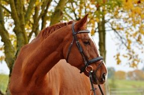 graceful horse in autumn
