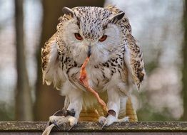 Owl Wildpark Poing