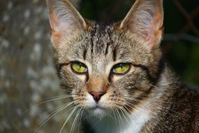 portrait of a young cat with green eyes