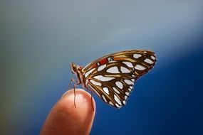 gorgeous beautiful Butterfly Insect