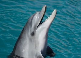 gorgeous beautiful Dolphin