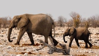 Elephants family in national park