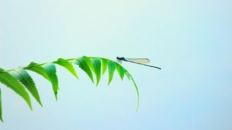 perfect beautiful Dragonfly Insect