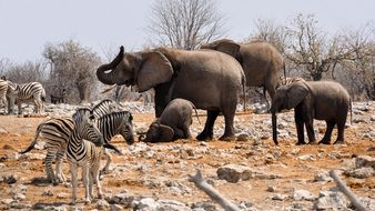 variety of animals in a national park in africa