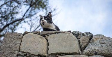 the cat lies on the rocks