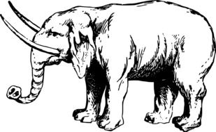 Black and white elephant drawing clipart
