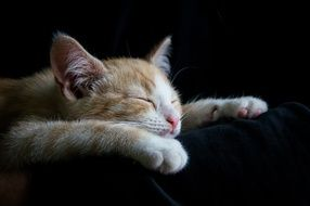 ginger tabby cat sleeping on the couch