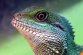 Chinese Water Dragon Head portrait