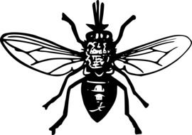 Black and white fly drawing clipart