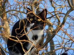 black and white cat on a tree