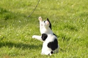 young cat playing on green grass
