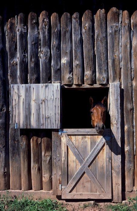 Horse peering from a stable window