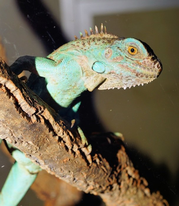 exotic green lizard