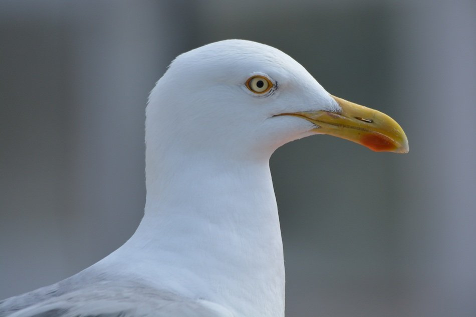 profile picture of a seagull