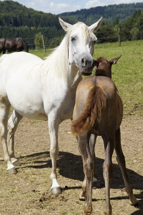young horse with mother