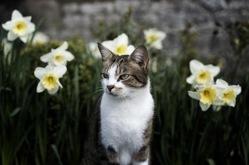 cute cat on the garden bed