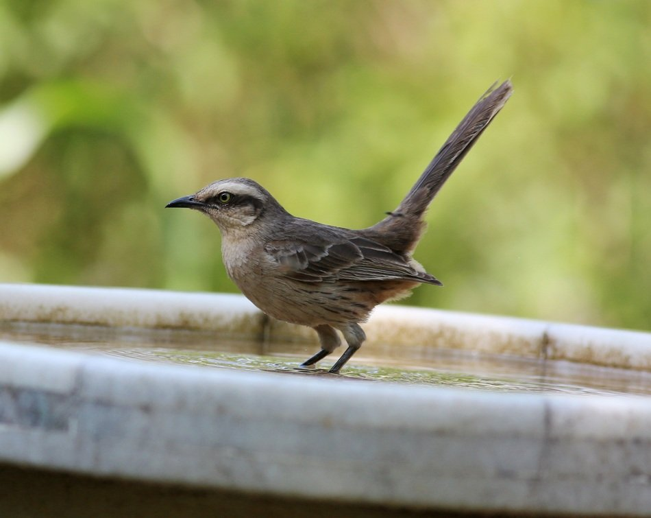 small bird with long tail in wildlife