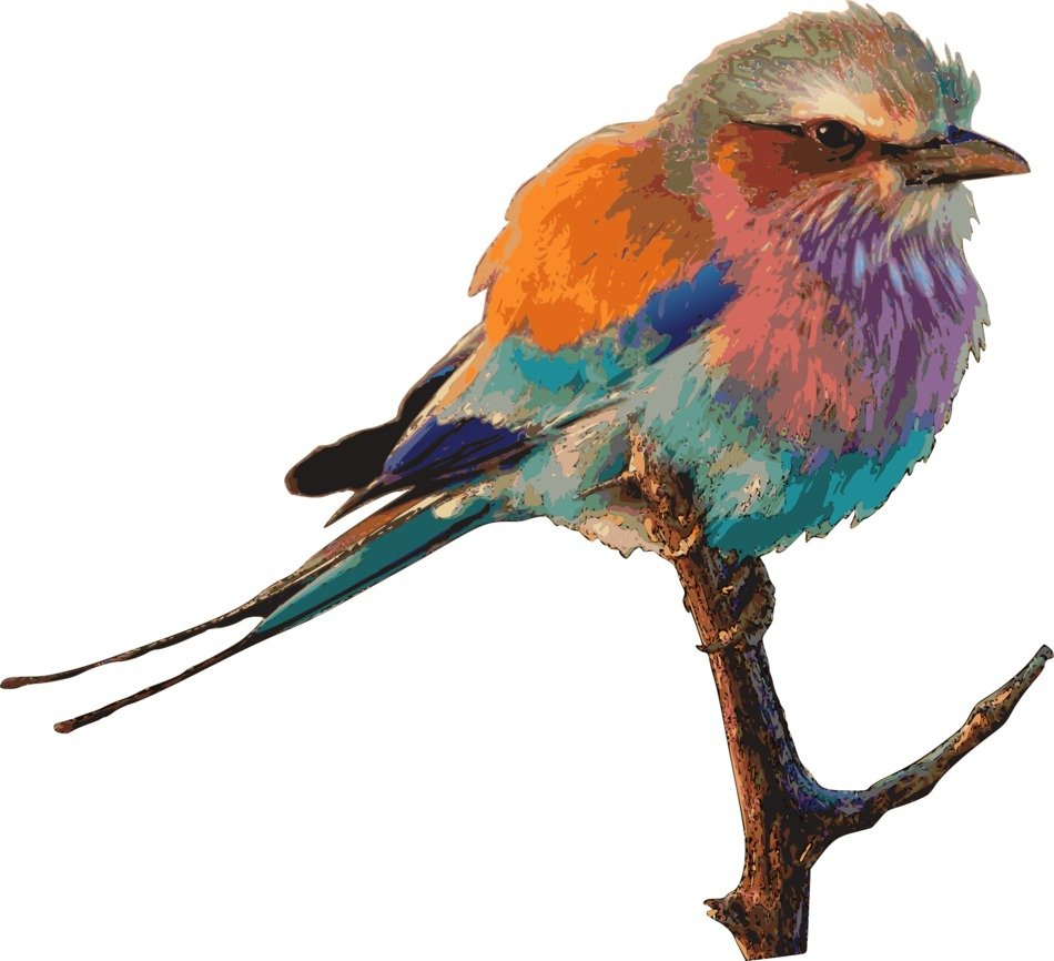 beautiful drawing of a multi-colored bird