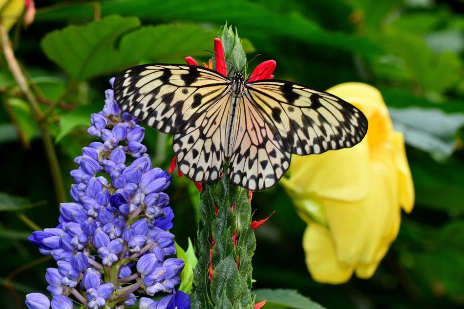 white and black butterfly on the exotic flower