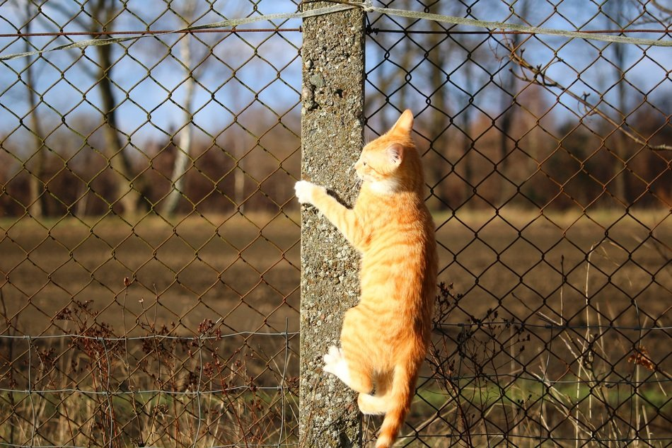climbing on fence young cat