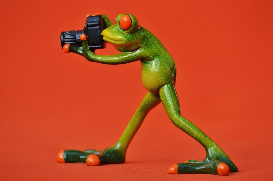 funny frog photographer