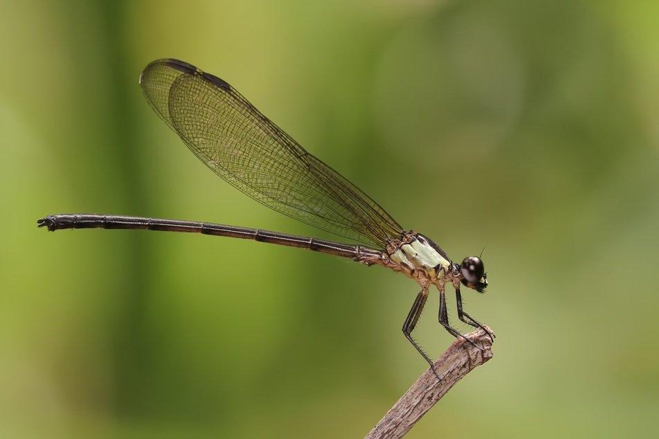 closeup of a damselfly in wildlife