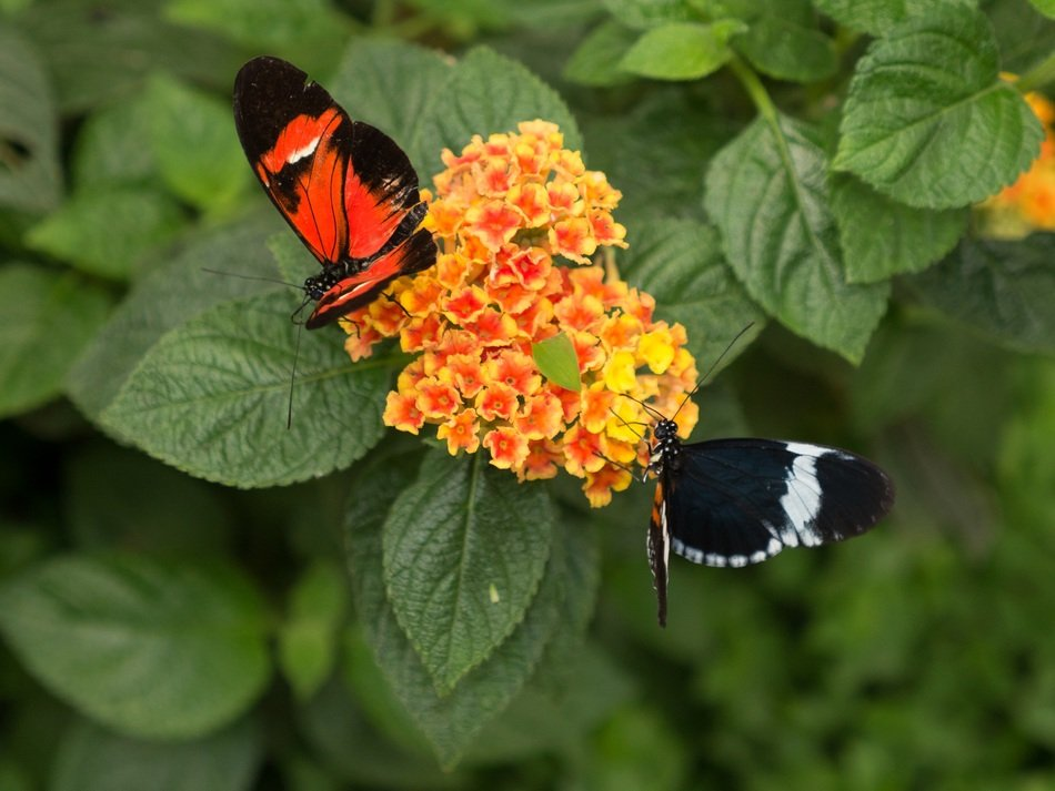 exotic butterflies in the butterfly park