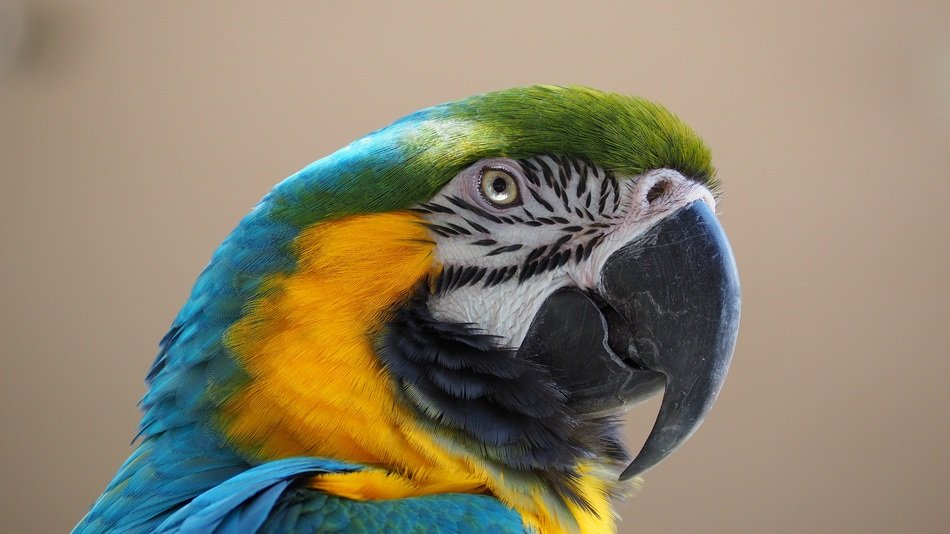 colorful tropical parrot