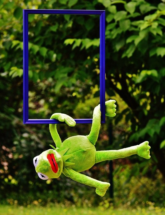 soft kermit hanging on picture frame