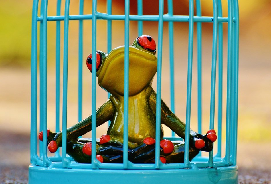 imprisoned ceramic frog