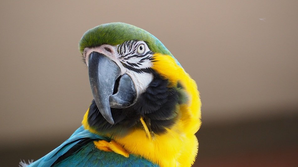 colorful macaw in wildlife