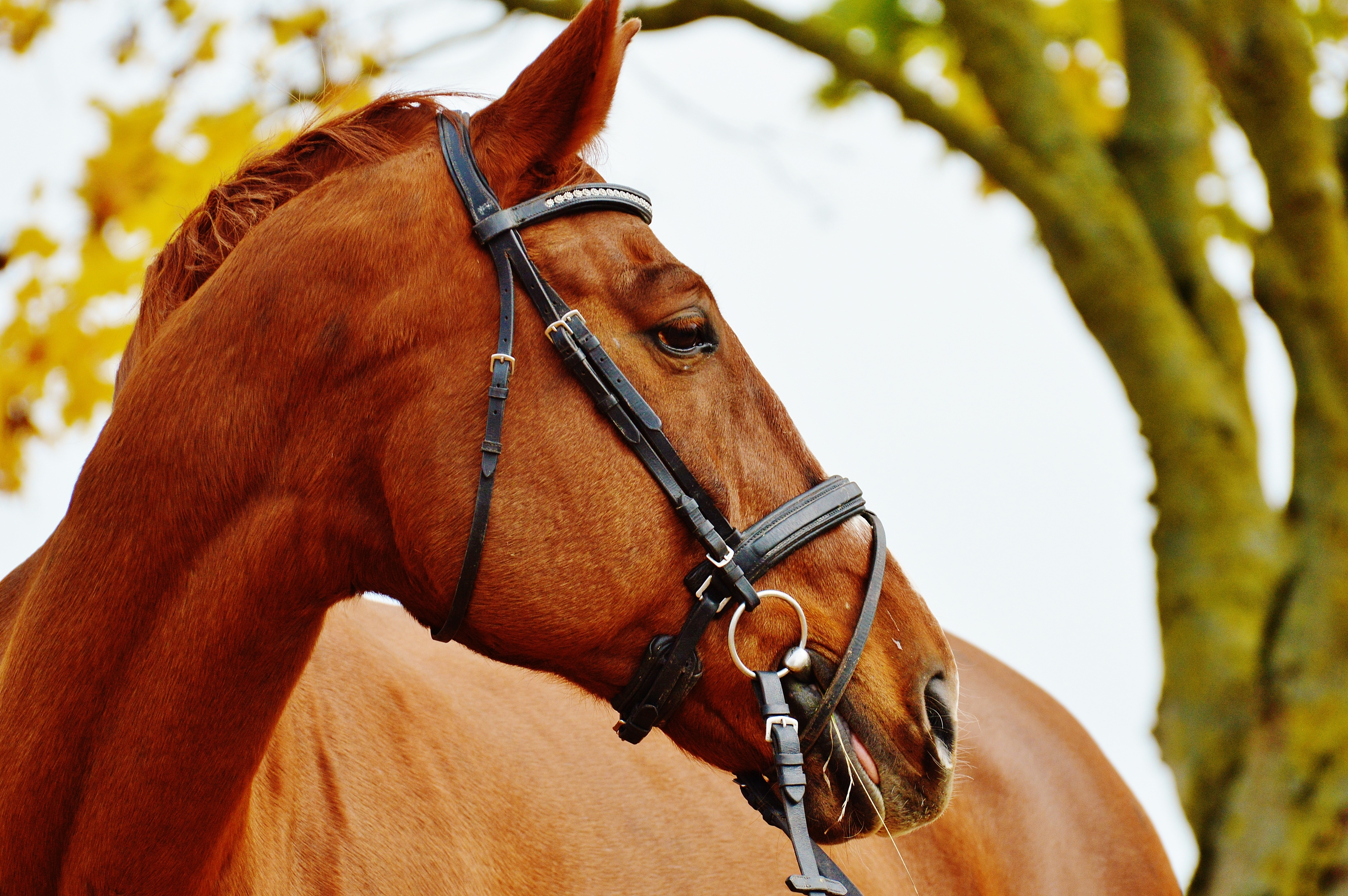 Light brown horse
