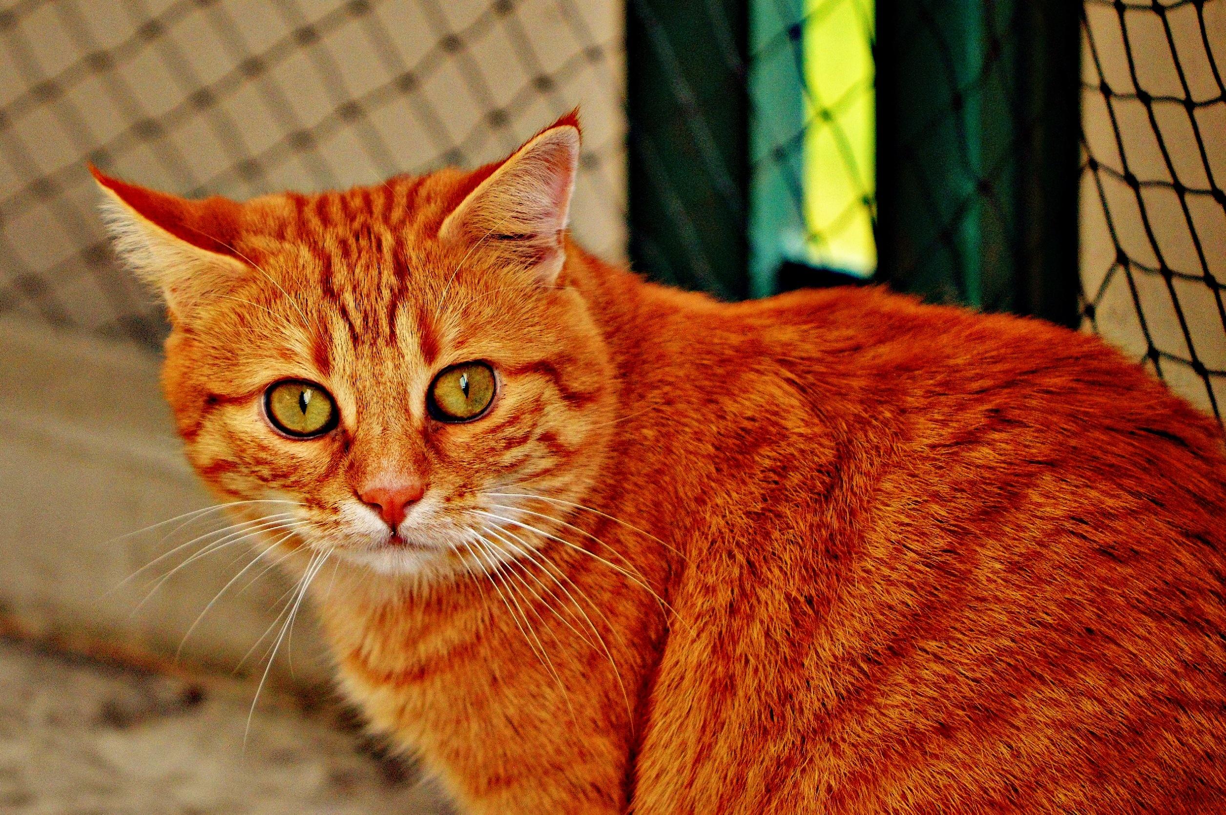 Прикольные картинки рыжий кот, добавить картинку