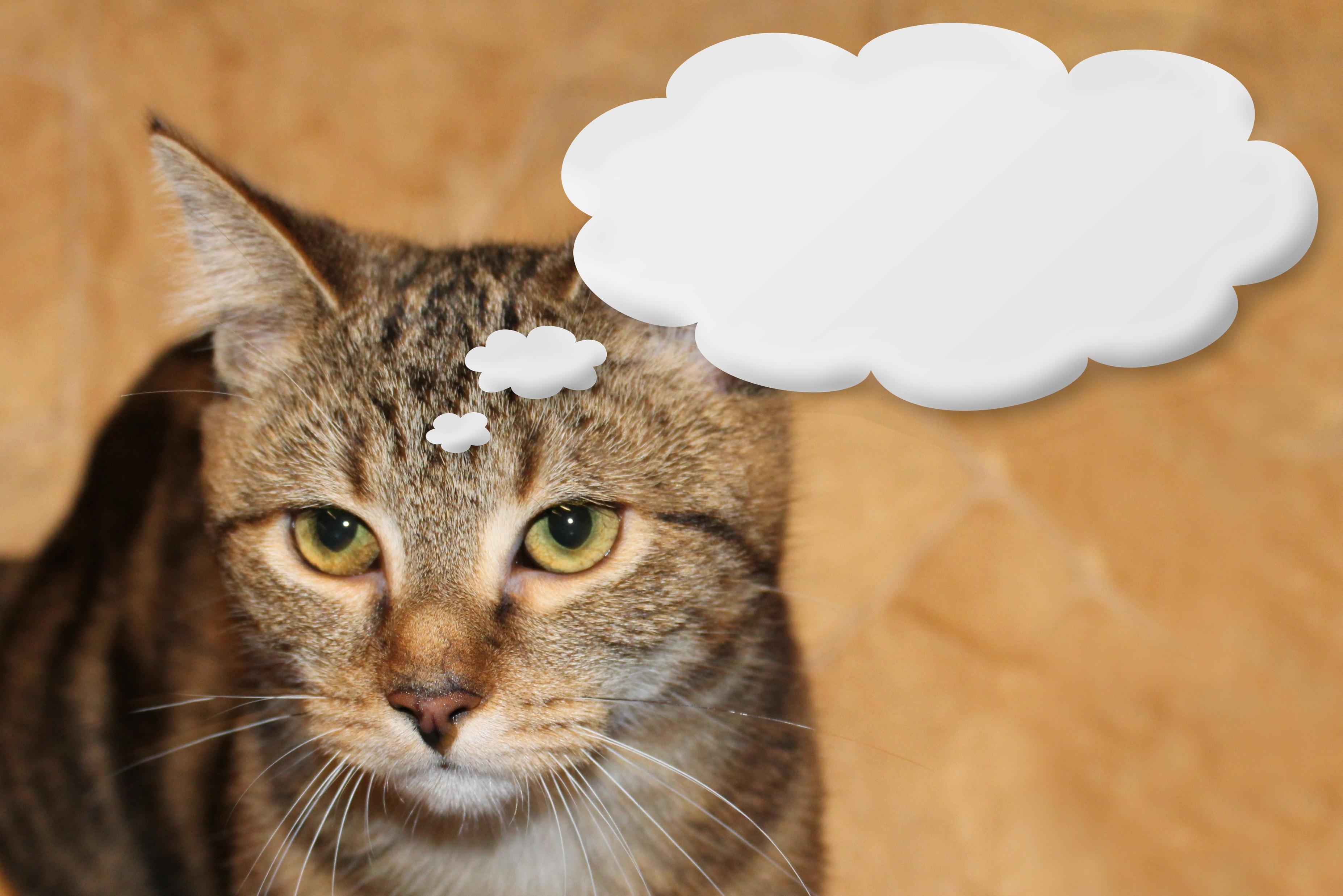 Прикольная картинка кот который размышляет