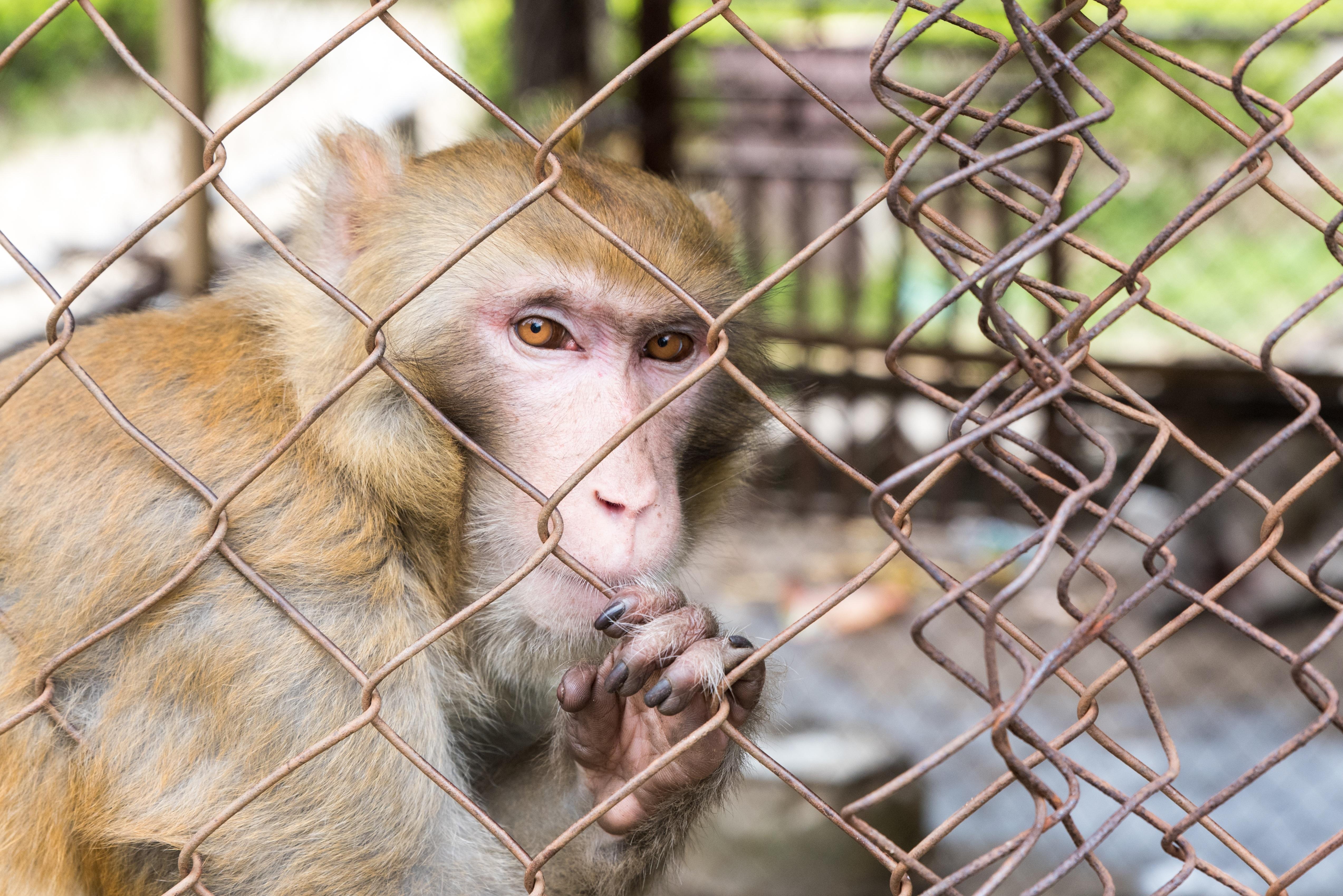 Cruelty to animals  Wikipedia