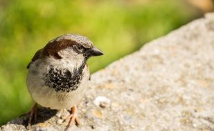 sparrow sitting on a stone wall